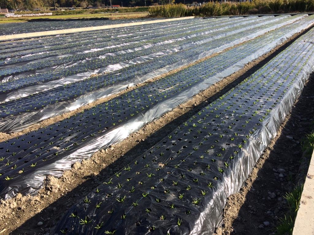 ブログは畑を耕すイメージ:何を蒔いてもいいけれど手をかけないと育たない